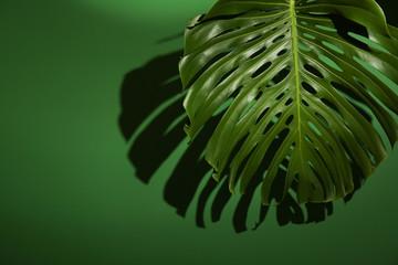 Green tropical leaf on color background