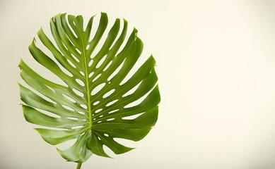 Grünes tropisches Blatt auf weißem Hintergrund