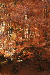 Beautiful landscape with autumn forest and fallen leaves on ground