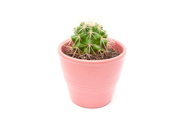 Cactus in flower pot isolated on white background close up