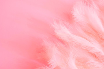 Color of the year 2019 - Living Coral .Background Pattern for your Design - feathers