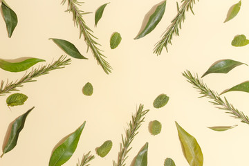 Mint leaves, mandarin and rosemary on a yellow background. Top view.
