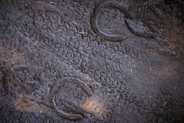 Bicycle tire tracks and horse shoe prints in the ground