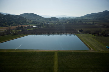 Field of grapevines surrounding a large square pond in the middle of a remote vineyard in the country.
