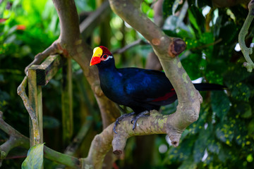 Blue parrot with a red and yellow beak is sitting in a tree.