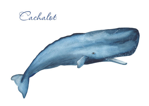 Ocean mammals watercolor. Illustration of jellyfish, whale, narwhal, sperm whale on a white background. For cards, invitations, weddings, logos, quotes, marine design.