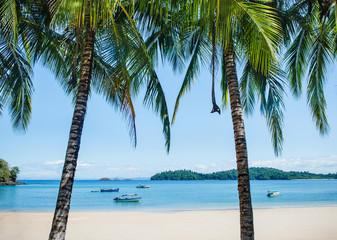 Palm trees on Coiba Island, Panama