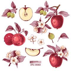 Apple fruit vector set. Hand drawn colorful illustration