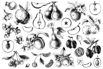 Hand drawn black and white fruits collection