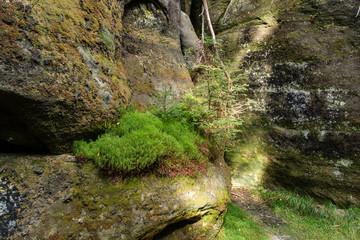 A moss growing on a rock.
