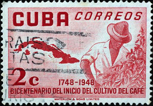 Man growing coffee plant on vintage cuban postage stamp