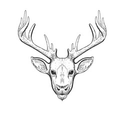 Raster vintage deer head in engraving, scratchboard style. Hand drawn illustration with animal portrait isolated on white background
