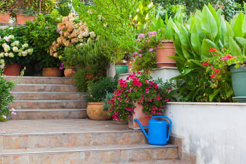 Diversity of flowers and plants on steps leading to the old house
