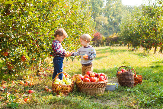 Little girl and boy play in apple tree orchard