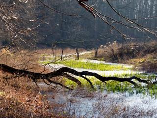 Jesienny krajobrazy puszczy w rezerwacie
