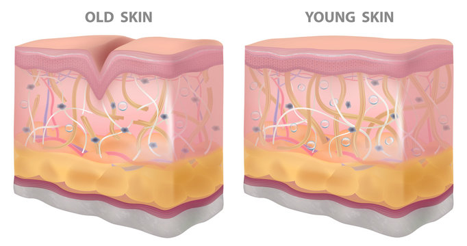 Skin young old wrinkles, realistic drawing,structure vector illustration
