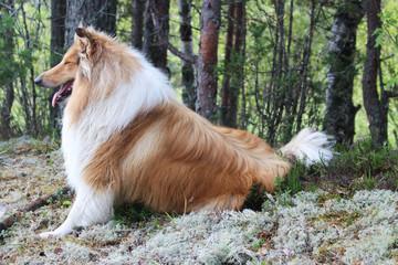 dog on the lake Ladoga