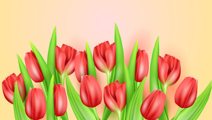 Spring flower beautiful background with realistic tulips. Vector stock illustration. Greeting spring card