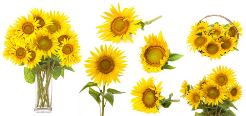 sunflowers isolated on a white background - collection