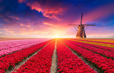 Foto op Plexiglas Tulp The road leading to the Dutch windmills from the canal in Rotterdam. Holland. Netherlands