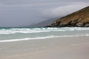 Landscape in The Neck on Saunders Island on Falkland Islands