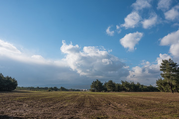 Plowed Field Surrounded by Trees Under Rainy Sky