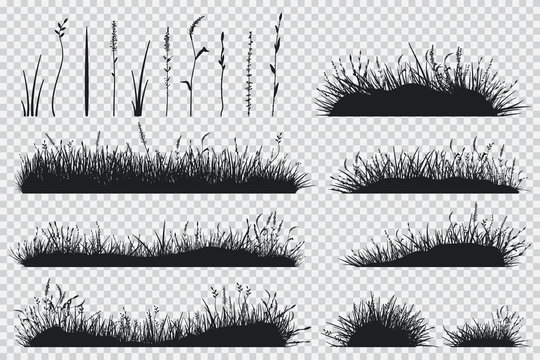 Grass black silhouette. Vector set of meadow plants isolated on transparent background.