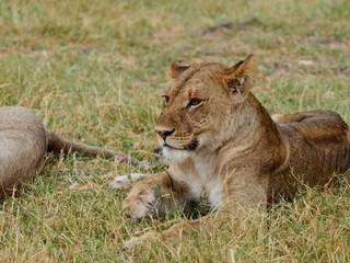 Safari @Khwai River