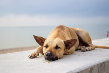 Stray dog sleeping at the beach while the sun rise.