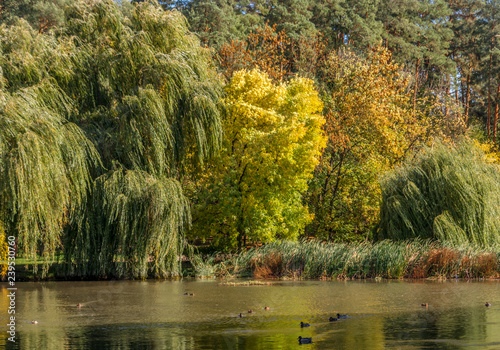 at a lake  beautiful nature  autumn colors  relaxation