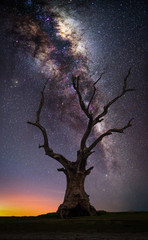 Wall Mural - Silhouette dead big tree on hill with milky way at sunrise.