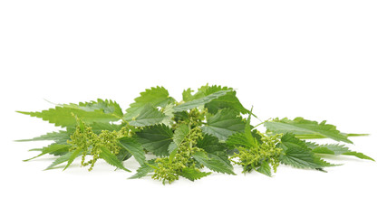 Green nettle with bloom.