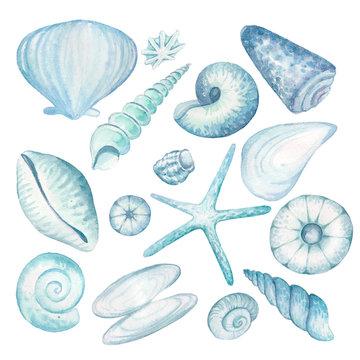 set of different shells