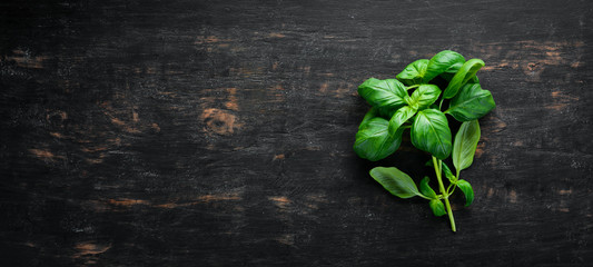 Fotomurales - Fresh basil and spices. On a black wooden background. Top view. Free copy space.
