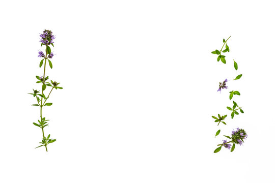 isolated fresh thyme leaves and flowers on white background with copy space in middle