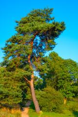 Berlin, Germany - Panoramic view of the Berlin Dahlem Botanical Garden and Museum - Botanischer Garten - with a pine tree