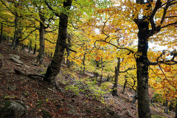 Scenic autumn forest view of South Coast of Crimea, Russia