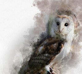 Watercolor Barn owl. Hand drawn watercolor owl perfect for design greeting card or print.