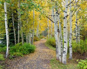 Autumn Aspen Trail