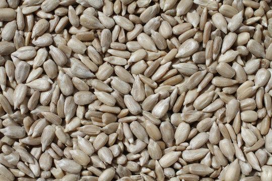 Food background - shelled sunflower seeds