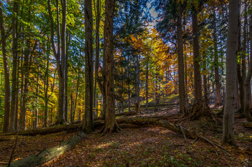 Autumn brown and yellow forest full on fallen leaves and with lightrays on the way up to Stadelwand summit, Schneeberg, Alpen, lower Austria