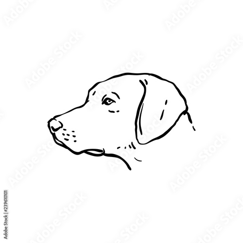 Hand Drawn Dog Illustration Side View Stock Image And Royalty Free