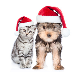 Kitten and puppy in red christmas hat together. isolated on white background