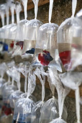Different fishes for aquarium in plastic bags displayed for selling