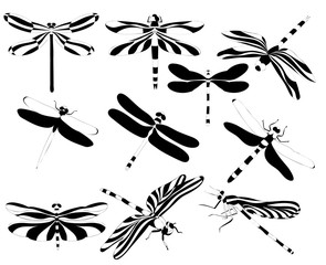 black and white dragonflies, insects, on a white background