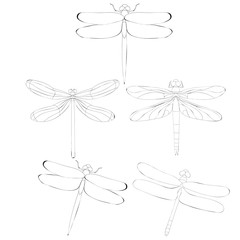 isolated, dragonfly sketch set, insects