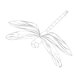 vector, isolated, dragonfly sketch, insect