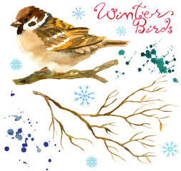 Design set with bird sparrow, winter branch, snowflakes, paint drops isolated on white. Natural hand painted watercolor illustration, cut out