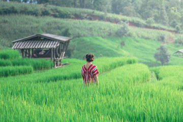Hill tribe girl in Paddy rice.
