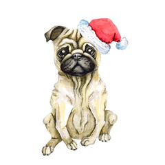 Pug dog celebrates new year in santa claus hat. Christmas puppy. Isolated on white background. watercolor